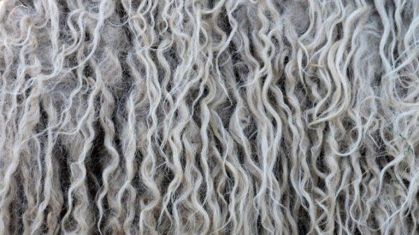 wool fiber crimp